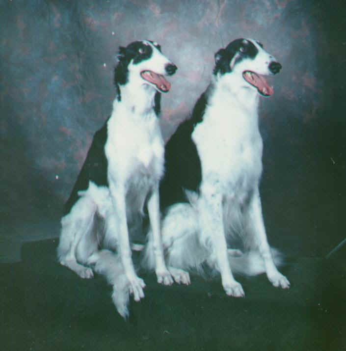 firstborzoi.JPG (41898 bytes)